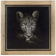 Cheetah Product Image