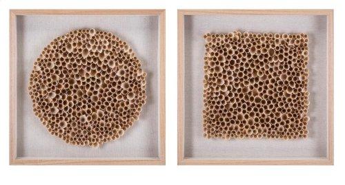 Halimeda Wood Art in Shadowbox - Ast 2