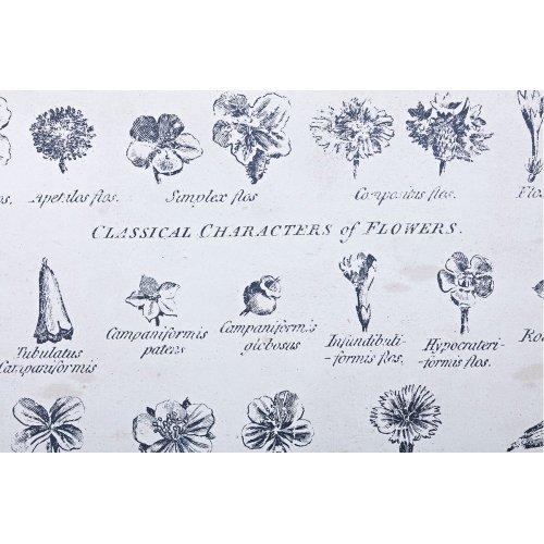 Botanical Wall Decor