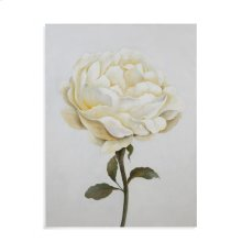 White Rose Study