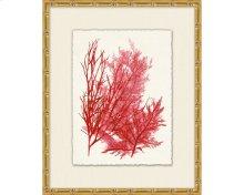 Azure Ocean Herbarium 7