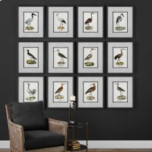 Seashore Birds Framed Prints, S/12