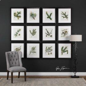 Pinecones Framed Prints, S/12