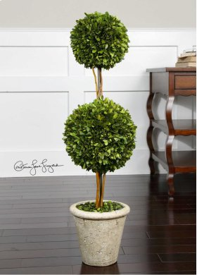 Preserved Boxwood, Two Sphere Topiar
