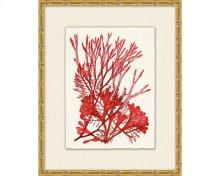 Azure Ocean Herbarium 2