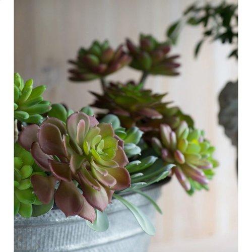 Green Succulent 5 Stem