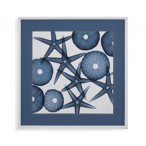 Starfish Sea Urchins