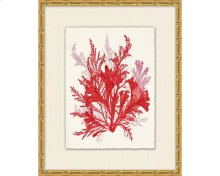 Azure Ocean Herbarium 8