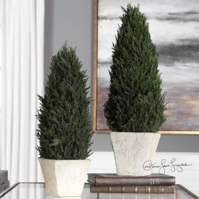 Cypress, Cone Topiaries, S/2