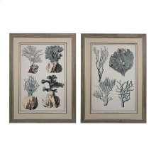 OVERSIZED CORAL SPECIES 1, 11 - FINE ART GICLEE UNDER GLASS