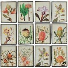 "S/12 9x12"" Field Guide Botanical Illustration Panels 1S/CTN"