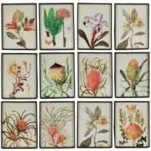 "S/12 9x12"" Field Guide Botanical Illustration Panels 1S/CTN"