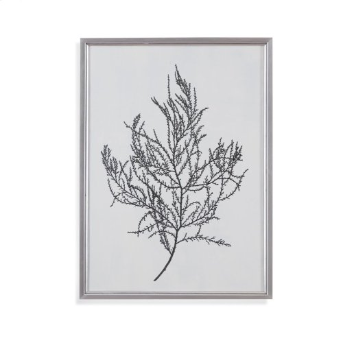 Silver Foil Algae III