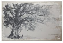 "JC38789  59x1.5x39"" Arboreal Shelter Canvas Print 2EA/CTN"