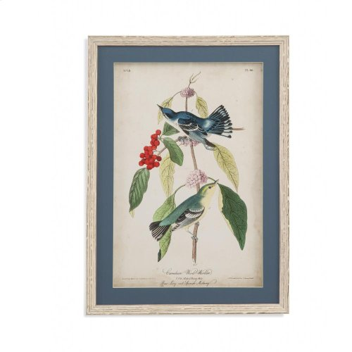 Cerulean Wood Warbler