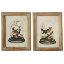 Framed Bird in Cloche Wall Decor with Glass (2 asstd).