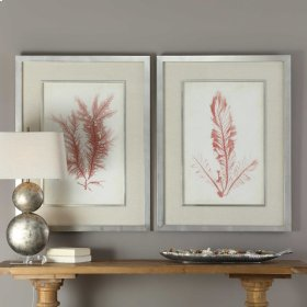Coral Sea Feathers Framed Prints, S/