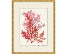 Azure Ocean Herbarium 6