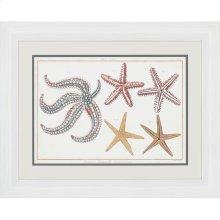 Starfish Naturelle II