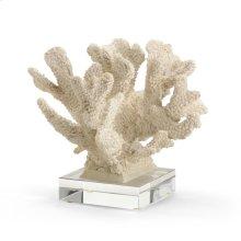 Coral Specimen