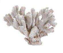 Pavaka Coral