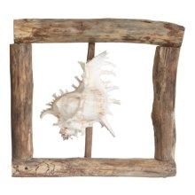 Driftwood Framed Ramosos Shell