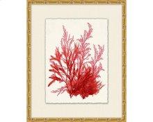 Azure Ocean Herbarium 9