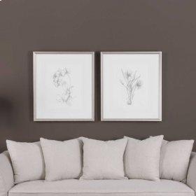 Botanical Sketches, S/2