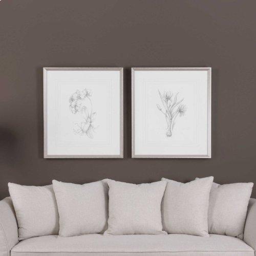 Botanical Sketches Framed Prints, S/