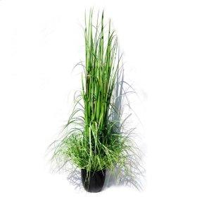 """72"""" Grass w/Pot"""