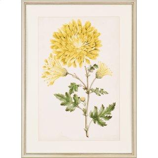 Floral Lace IV