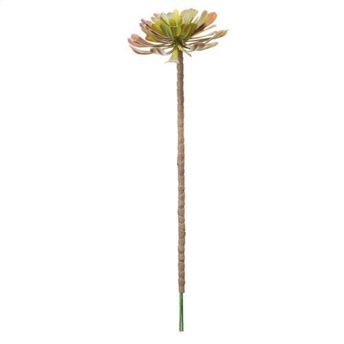 ElGreko Succulent Stem