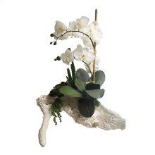 Orchid W/Succulent