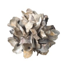 Small Oyster Shell Decorative Sphere.