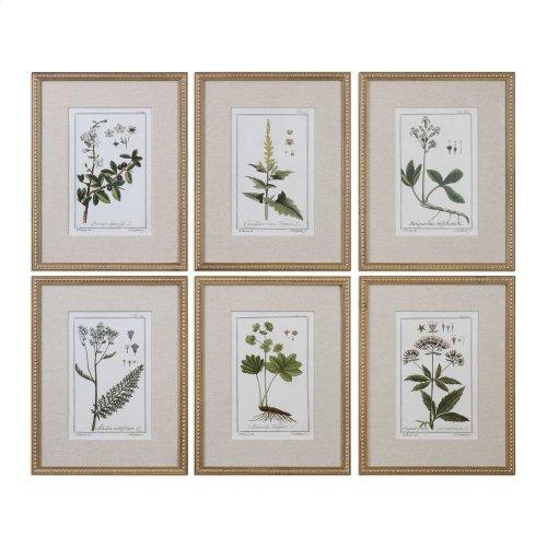 Green Floral Botanical Study Framed Prints, S/6