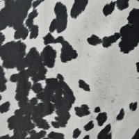Udder Madness Domino Product Image