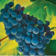 Grapes Printed Canvas Painting Product Image
