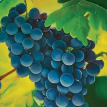 Grapes Printed Canvas Painting
