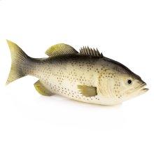 Soft Bass Fish
