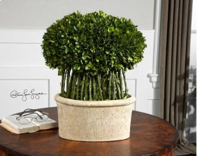 Preserved Boxwood, Willow Topiary