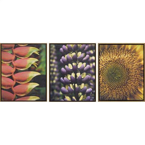 Florals II Pk/3