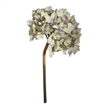 Hydrangea,Smokey White