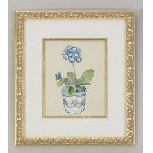 Blue Auricula