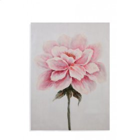 Pink Peony Study