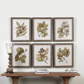 Seedlings Framed Prints, S/6