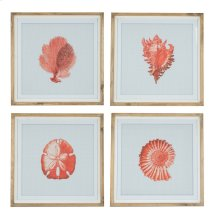 Shell Prints - Set Of Four