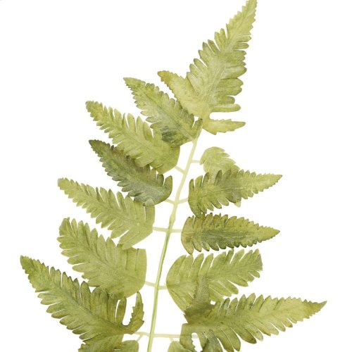 "36"" Fern Spray"