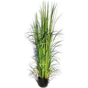 """86"""" Grass w/Pot"""
