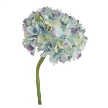 Hydrangea-Blue Tinged