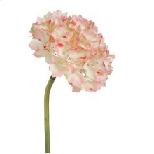 Hydrangea,Pink Tinged